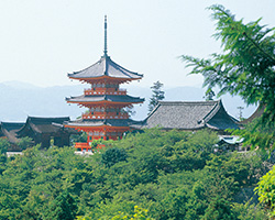 遠くから撮影したお寺の風景