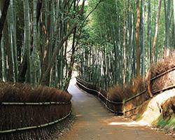 森林内の道