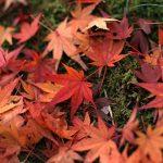 秋の京都お出かけ