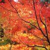 秋の京都散策八坂神社編