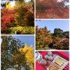 秋の京都お出かけ永観堂