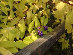 秋の京都紫式部