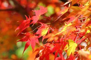京都,城南宮,曲水の宴
