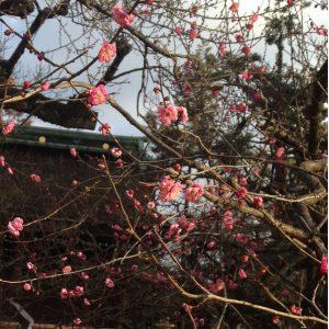 京都着物レンタル花かんざし梅の花_02