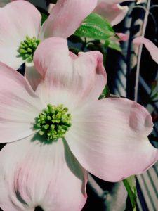 京都着物レンタル花かんざし 花水木
