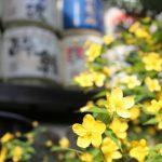 京都着物レンタル花かんざし 松尾大社