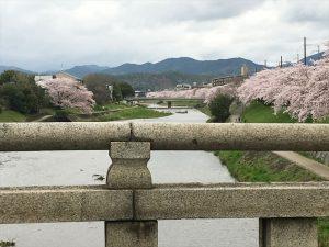 京都着物レンタル花かんざし桜情報出町柳