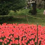 京都着物レンタル花かんざしチューリップ
