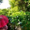着物姿の女性と生い茂る草木