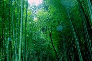 京都着物レンタル花かんざし 竹林