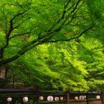 京都着物レンタル花かんざし 貴船川床