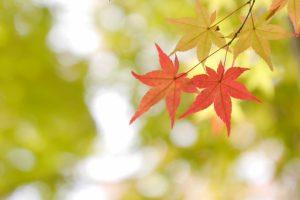 京都着物レンタル花かんざし四国八十八ヶ所お砂踏法要