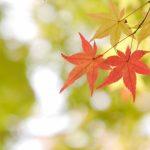 京都着物レンタル花かんざし 秋のお出かけ
