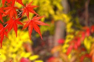 京都着物レンタル花かんざし 春日祭