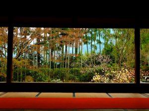 京都着物レンタル花かんざし 勤労感謝の日