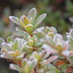 「京都駅」からひと駅京都着物レンタル花かんざし 冬