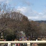 京都駅からひと駅花かんざし 京都マラソン