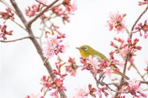 京都駅からひと駅花かんざし 梅の花