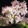 京都着物レンタル花かんざし 京都の桜