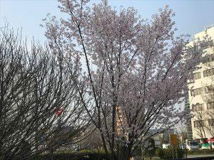 京都着物レンタル花かんざし お花見
