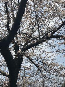 それでは今日も素敵な一日をお過ごしくださいませ 京都の玄関口「京都駅」からひと駅。着物に必要な物が全てそろって3000円からのお手軽プライス 京都着物レンタル 花かんざし