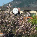 京都着物レンタル花かんざし 八重桜