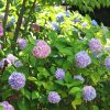 京都着物レンタル花かんざし 6月キャンペーン
