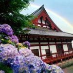 京都着物レンタル花かんざし 紫陽花と虹