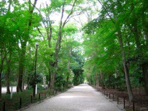 京都着物レンタル花かんざし 下鴨神社 糺の森 光の祭