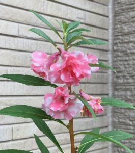京都着物レンタル花かんざし 鳳仙花