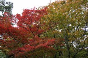 京都着物レンタル花かんざし 東福寺