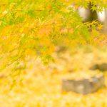 京都着物レンタル花かんざし 京都の紅葉