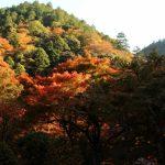 京都着物レンタル花かんざし 京都の秋
