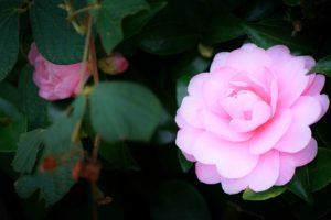 京都着物レンタル花かんざし 冬至