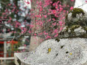 京都着物レンタル花かんざし  梅苑
