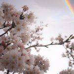 京都着物レンタル花かんざし 虹