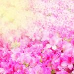 京都着物レンタル花かんざし つつじ