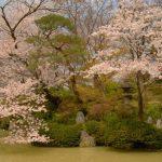 京都着物レンタル花かんざし 桜